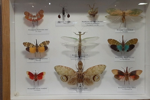нравы насекомых.jpg