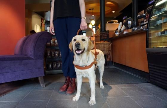 Картинки по запросу собакам-поводырям